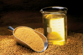 The Benefits of Soybean Oil